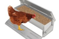 Are You Looking For Rat Proof Chicken Feeder? Read This First!